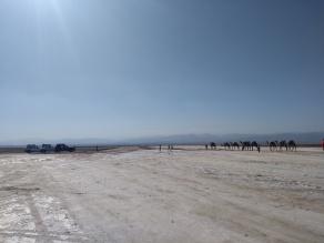 camel caravan meets jeeps