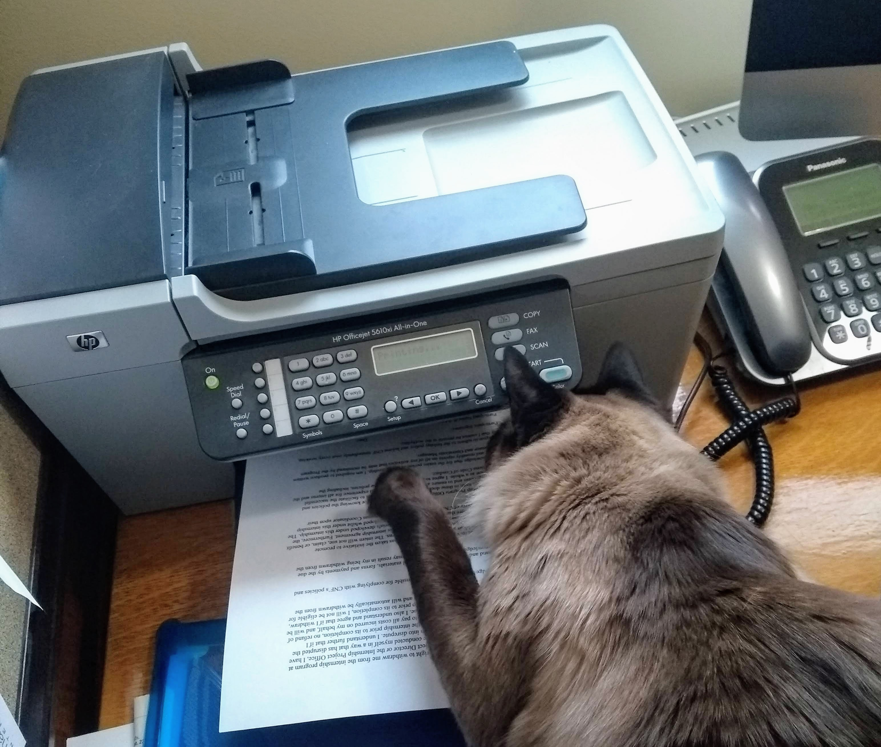 cat pawing at pages coming out of a printer
